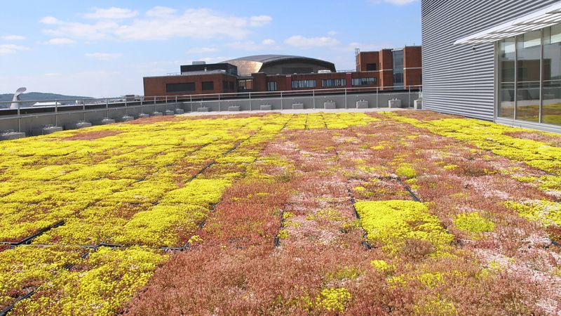 Sedum roof 3 Assembly Square Cardiff Bay, Cooke & Arkwright